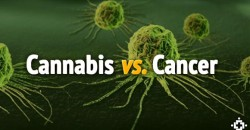 Think Pot Can't Cure Cancer? Watch It Kill Cancer Under A Microscope