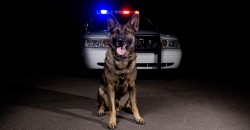 Supreme Court: Cops Can't Violate 4th Amendment by Prolonging Traffic Stops to Wait for Drug Dogs