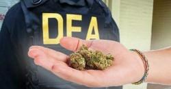 New DEA Chief Retreats On War Against Weed, Says DEA Will No Longer Focus On Marijuana