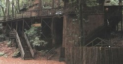 The Subcamps of Bohemian Grove