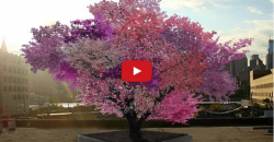 This Stunning Tree Bears 40 Different Kinds of Fruit Using an Ancient Technique