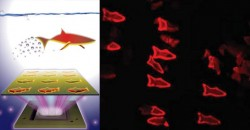 "Microscopic 3D-Printed ""Smart"" Fish Nanobots to Swim in Bloodstream & Remove Toxins"