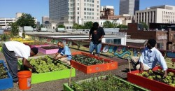Homeless Plant a Massive Organic Rooftop Garden, Then Use it to Feed an Entire Shelter