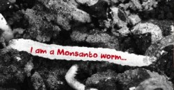 EPA Raises Alarm Over GMO Crops That Are Breeding Swarms Of Mutant Bugs