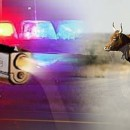 Cops Call Rancher for Help with a Bull, When He Showed Up the Cops Killed Him