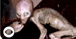 Are Aliens Hiding Under The Sea?