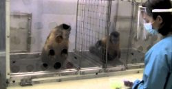 What happens when you pay two monkeys unequally?